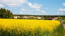 <h5>Wenn die Rapsfelder blühen...</h5><p>Die schöne Lage in ländlicher Umgebung unterstreichen im Frühjahr die blühenden Rapsfelder.                                                                                                                                                         </p>