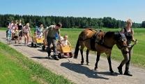 <h5>Ausflug mit den Tieren</h5><p>Unser Therapiestall bietet den Patienten reizvolle Begegnungen und Unternehmungen mit Pferden, Ziegen, Hühnern oder unserer Eselin Clara.                                                                                                                                                         </p>